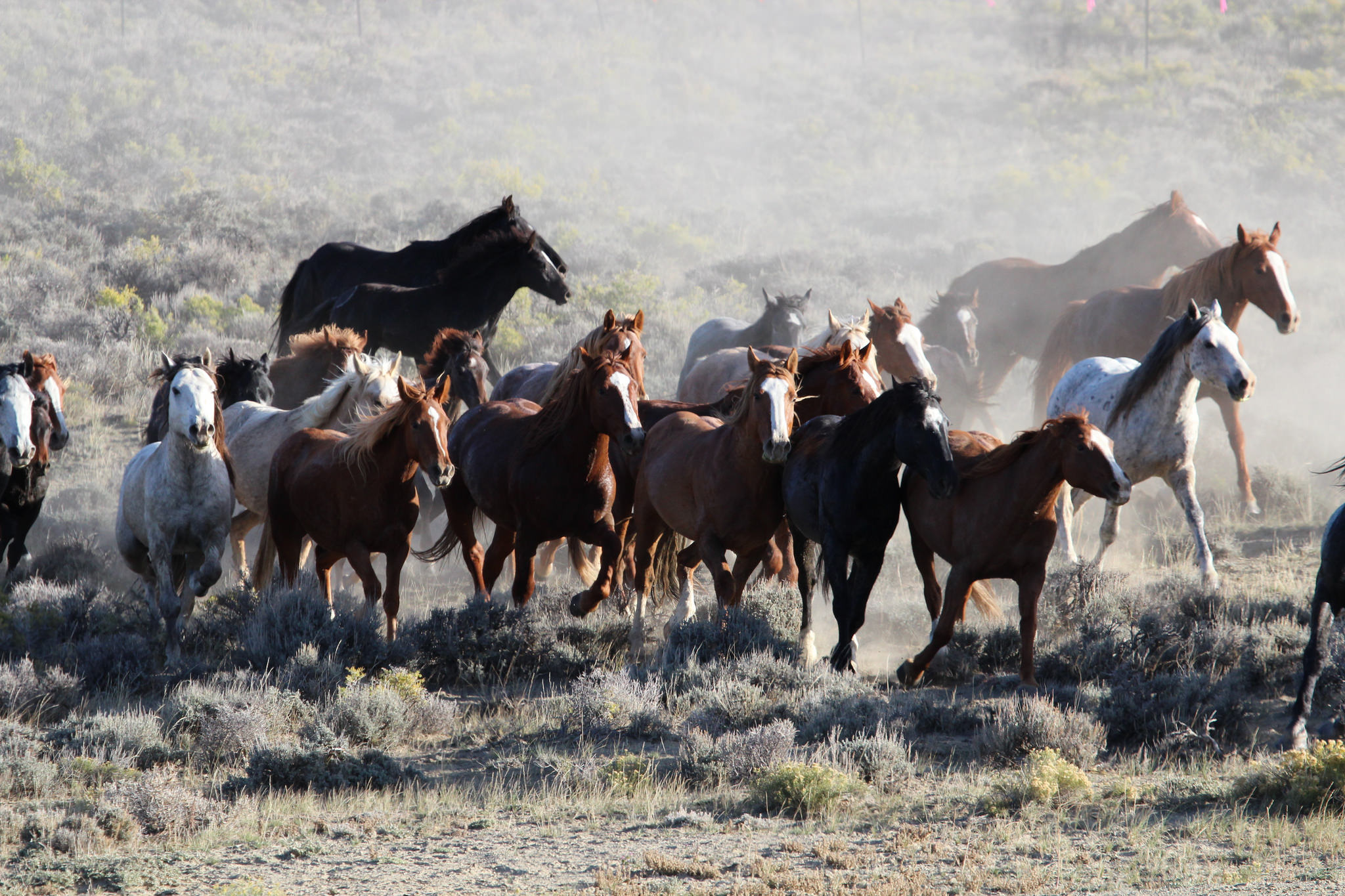 BLM Targets Wyoming Wild Horses